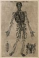 The arterial system of the human body. Engraving, 1568. Wellcome V0007739EL.jpg