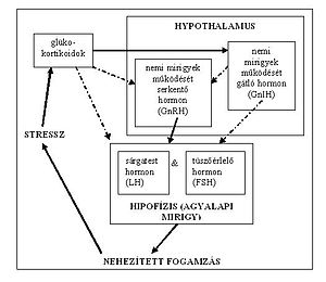 The interrelationship between stress and hormone functions