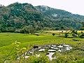The old Philippine farm.jpg