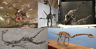 Therizinosauria