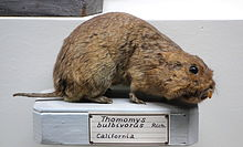 Stuffed gopher in museum