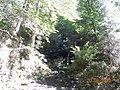 Tiny Waterfall (44499898).jpeg