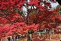 Tofuku-ji (4585131001).jpg