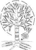 Tourism's tree.png
