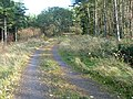 Track Through Kinlea Wood - geograph.org.uk - 277365.jpg