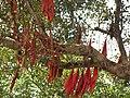 Tree (259370498).jpg
