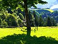 Tree And Bicycle - panoramio.jpg
