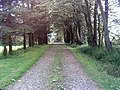 Tree Lined Drive - geograph.org.uk - 462045.jpg