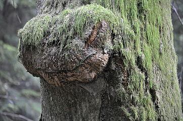 Tree Serpant.jpg