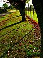 Trees And Shadow - panoramio.jpg