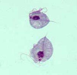 Parabasalid - Trichomonas giemsa