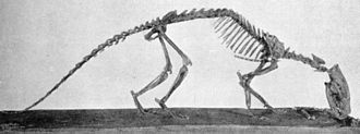 Hyaenodontidae - Tritemnodon
