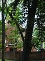 Trzęsacz park, XVIII nr 658124 (7).JPG