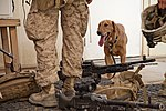 U.S. Marines with Golf 2-8 Conduct Mission Rehearsals 130710-M-YH552-029.jpg