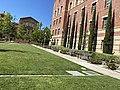 UCLA lawn.jpg