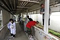 US Navy 110630-N-OX597-008 Sailors paint during a community service project at the Tsukumo En Challenged Home in Sasebo, Japan.jpg
