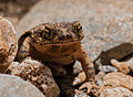 Undefined toad.jpg