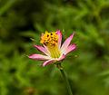 Unidentified flower, Sukorambi Botanical Gardens, Jember 02.jpg