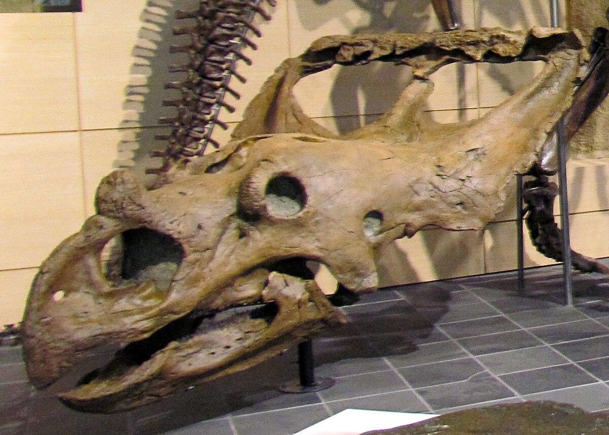 vagaceratops wikipedia