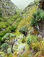 Valley of Fan Aloes - Western Cape mountains - South Africa 3.jpg