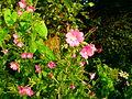 Verge flowers 11.JPG