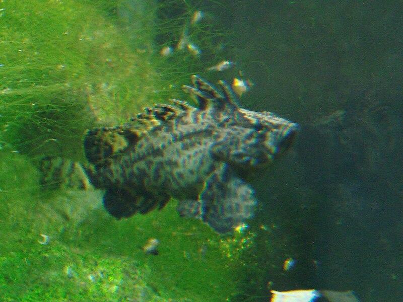 Апрельский заказ АГ 800px-Vespicula_depressifrons_(Wroclaw_zoo)
