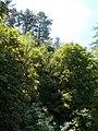 Veszprémvölgy 2016, forest covered Gulya hill.jpg