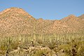 View of the Saguaros and a distant ridge. (6989392327).jpg