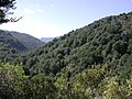 View up Catchpool Valley.jpg