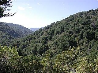 Remutaka Forest Park