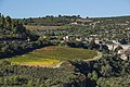 Vineyards, Minerve cf01.jpg