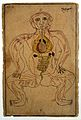 Viscera and venous system, watercolour, Persian, 19th C Wellcome L0020502.jpg