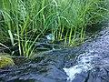 Vitrupes ieleja netālu no Brīdagas (Ķirbižu Upītes) 7.jpg