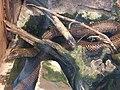 Vlinders aan de Vliet 02.jpg