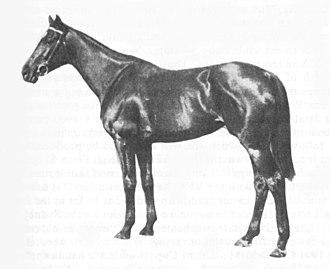 Wakeful (horse) - Image: Wakeful