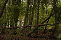 Wald im Nationalpark Eifel.jpg