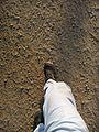 Walking in the dust.jpg