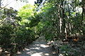 Walkway - Institute for Nature Study, Tokyo - DSC02086.JPG