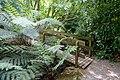 Walkway - Trengwainton Garden - Cornwall, England - DSC02530.jpg