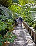 Walkway through palms in Palm House, Kew Gardens.jpg