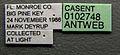 Wasmannia auropunctata casent0102748 label 1.jpg