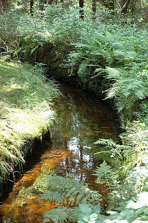 Upper Harz Water Regale - The Dam Ditch near Altenau