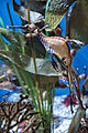 Weedy Sea Dragon (18445734043).jpg