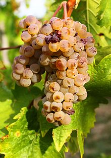 Welschriesling grape cluster.jpg