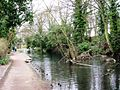 Wendover Arm, Fallen Tree in the Canal - geograph.org.uk - 1235612.jpg