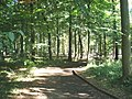 Wendover Woods - geograph.org.uk - 1440533.jpg
