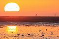 Westpuntschier-rh 20101013 010.jpg