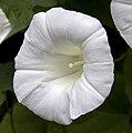 White (4844001620).jpg