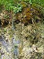 WikiProjekt Landstreicher Geotop Eistobel 14.jpg