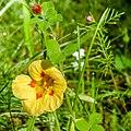 Wild Flower (14458030570).jpg